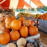 Emily's Produce pumpkins