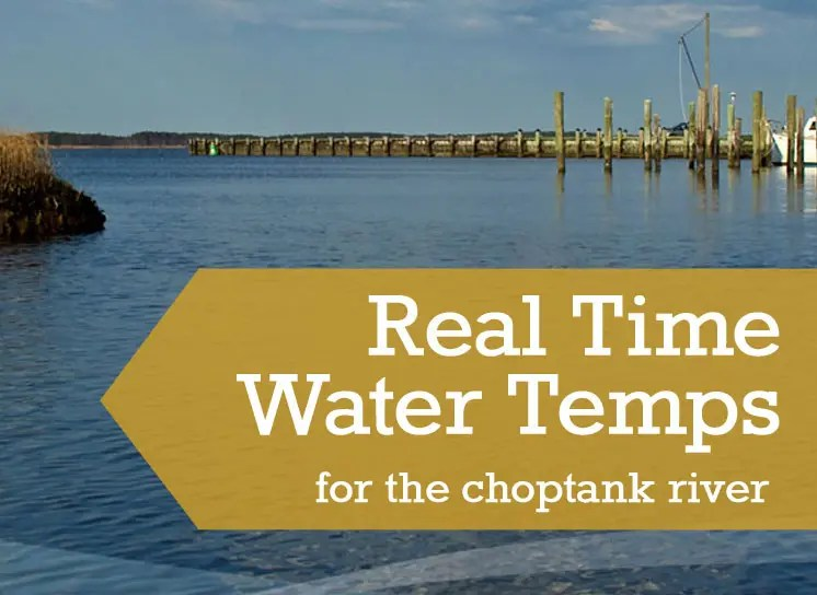 Real Time Water Temperatues in the Choptank RIver, Cambridge, MD