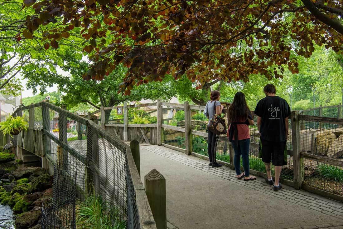 david-traylor-zoo-guests