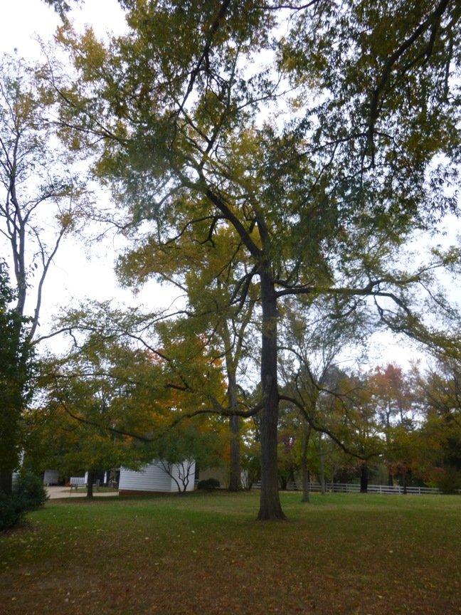 fall blog 13