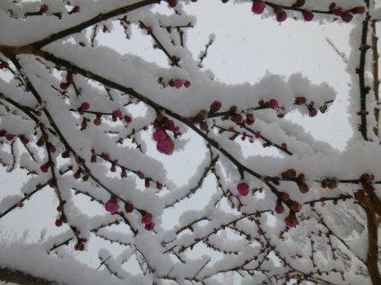 r-winter 2013 054