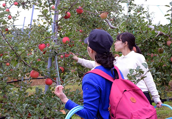 Apple Picking with Pick-Up Service Starts!