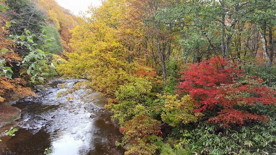 Peak Autumn Colors in the Mountains of Matsumoto!
