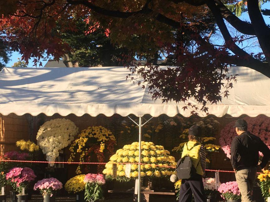 第60回 国宝松本城「菊花展」