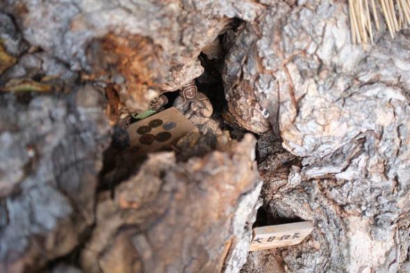A guardian spirit for travelers, hidden inside the tree!!