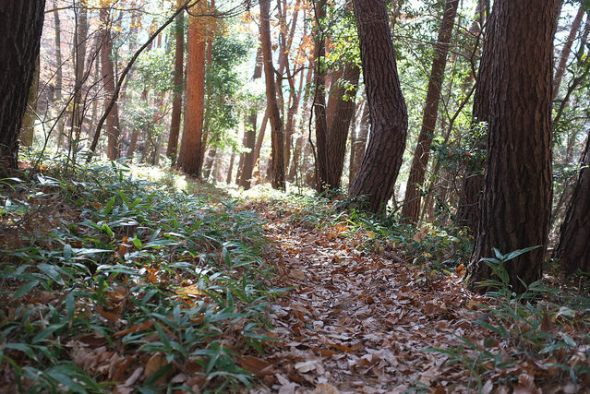 Pretty trail with fallen leaves