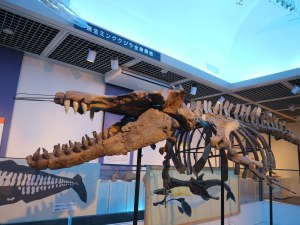 Musée des fossiles de Shiga