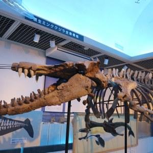 世界最古の「マッコウクジラの化石」を保存する四賀化石館・奇跡の物語