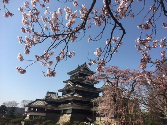 コヒガンザクラとしだれ桜と松本城 2018/3/31