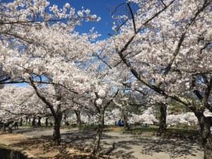 조야마(城山)공원