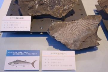 化石館パネル