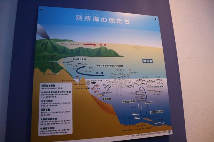 化石館海のパネル