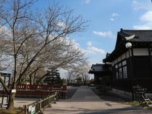 松本市歴史の里 博物館でお花見を-桜茶振る舞い