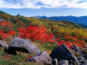 Mt. Norikuradake (Mountain Top & Daisekkei - Kuraigahara)