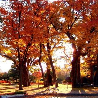 Parc d'Agatonomori