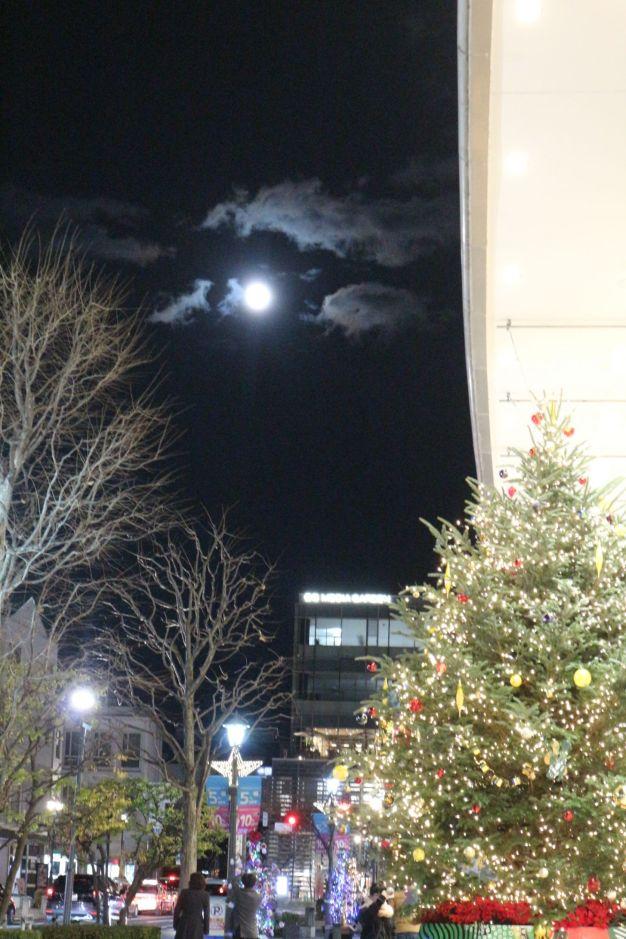 満月とツリー