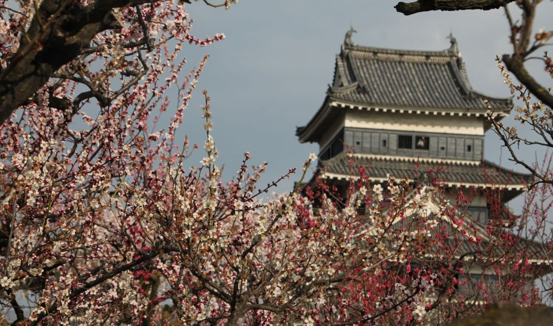 Spring is Blooming in Matsumoto!