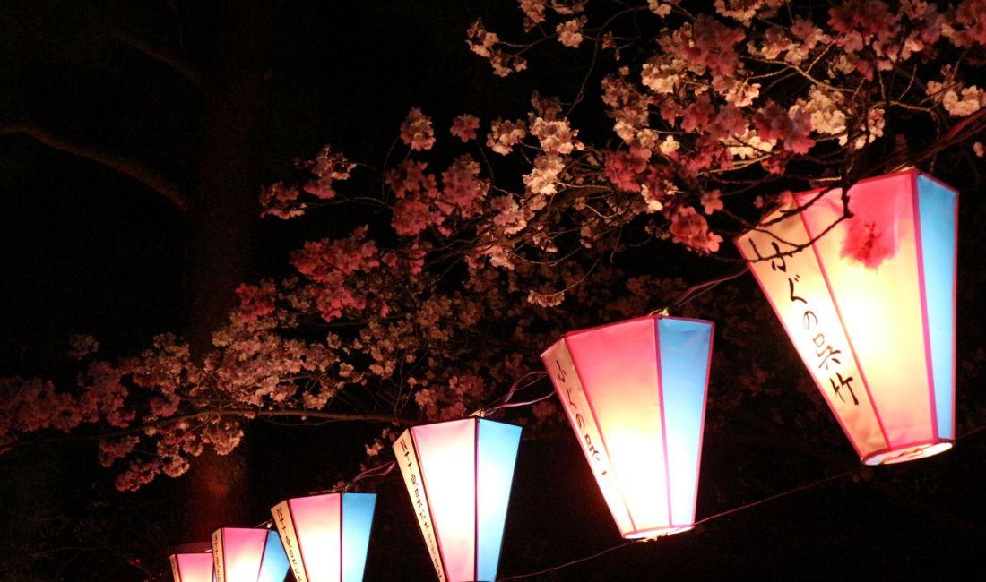 城山公園の桜と夜景 静かな夜を楽しむひととき 2019/04/16