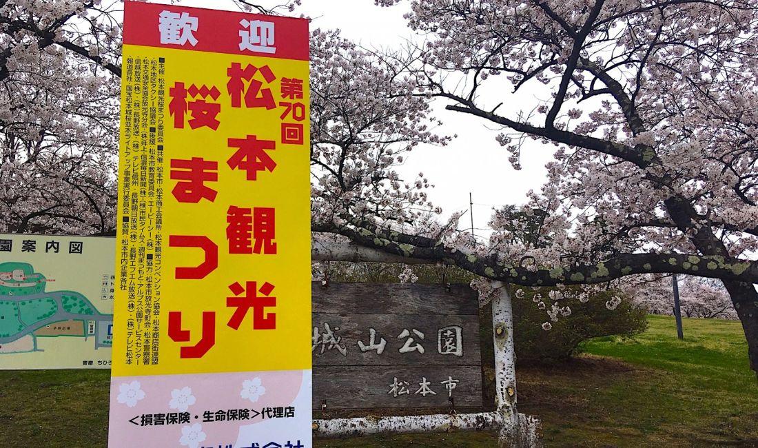 Сакура в парке Джояма