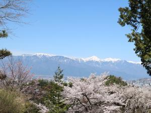 広沢寺の桜満開・北アルプスを遠望する!