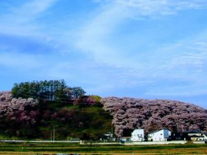 Mountains of Cherry Blossoms - Part One: Kobo-yama