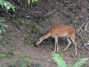 千鹿頭で、鹿に出会った