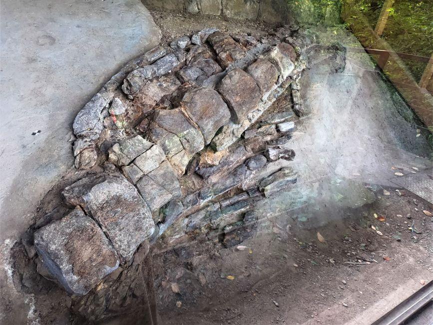 県天然記念物 穴沢のクジラ化石