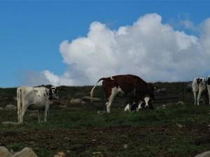 天空の牛 9月の美ケ原高原