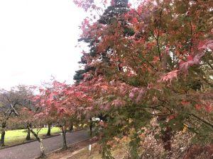 Дождливая осень. Парк Джояма.
