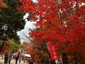 えびす講と四柱神社紅葉