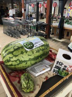 猜猜这西瓜有多重?