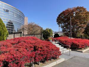 10月的紅葉🍁