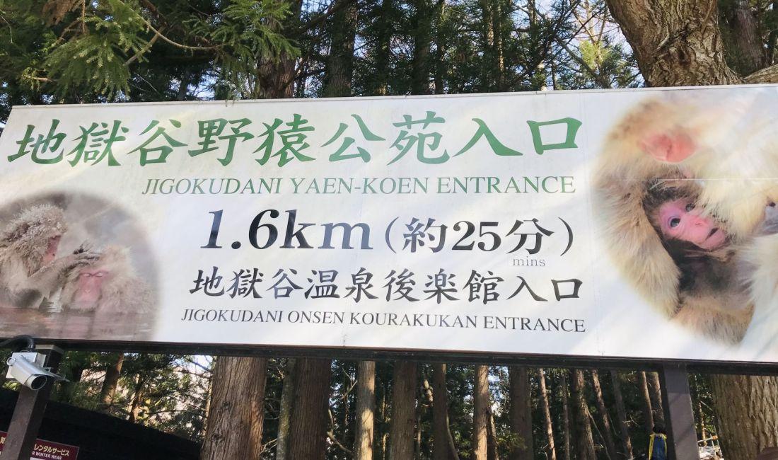 Дзигокудани. Японские макаки и Онсен.