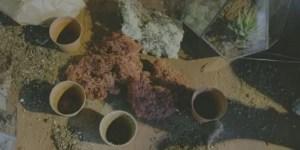 filling flower pots