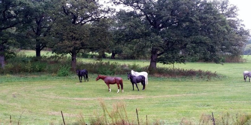 Former thoroughbred racehorses relax in the pastures of Unbridled Spirits.