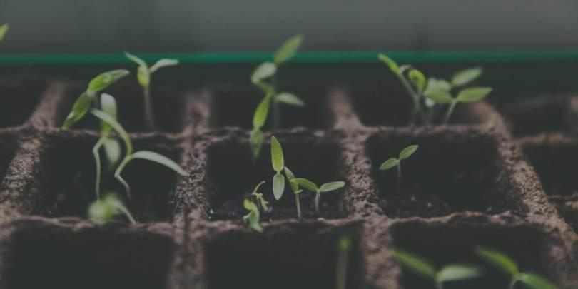 new plants for garden