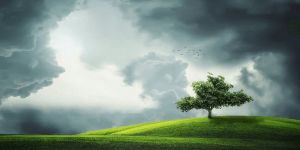Storm in a field with a tree