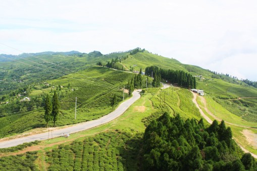 A marvelous view of tea farm captured from high hills. You can experience a real paradise when you get a chance to take a deep long breathe after you reach there.