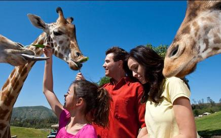 Adventure at San Diego Safari Park