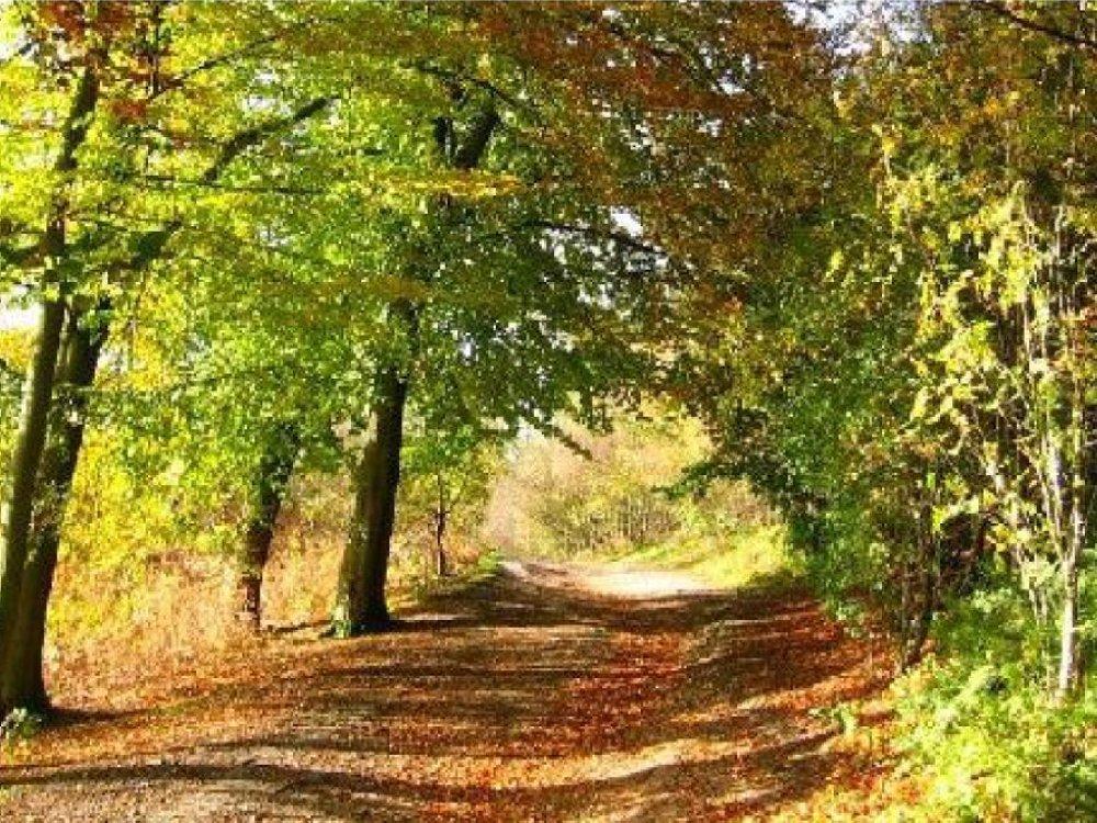 Delamere-Forest