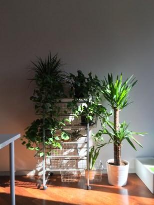AuroraDestro-Corner