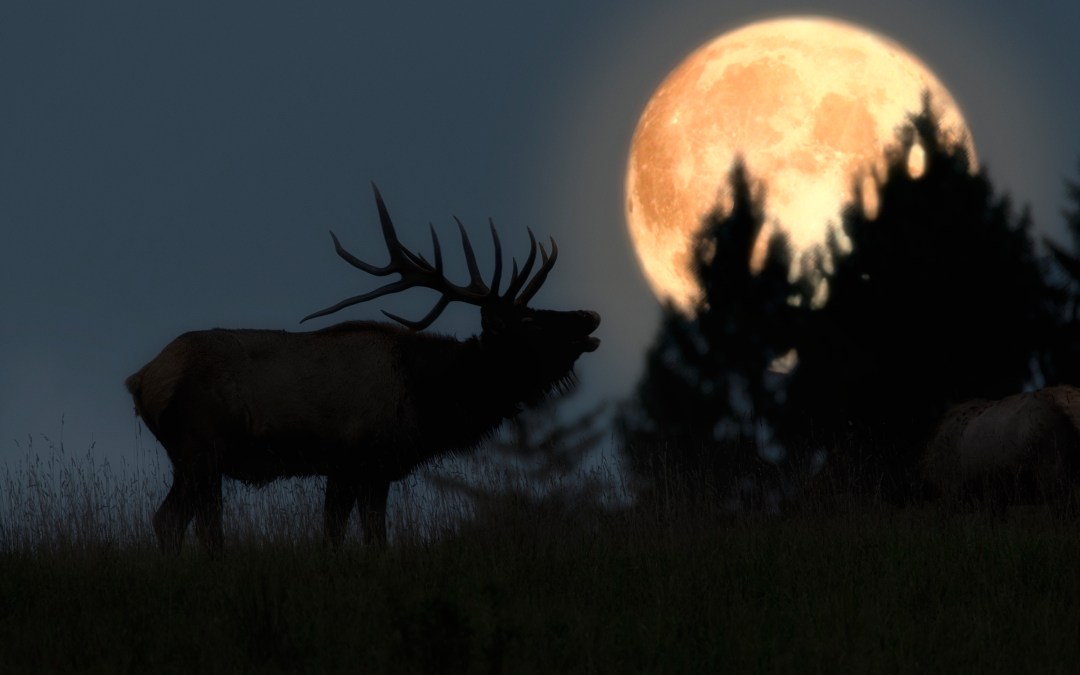 Experience the Excitement of Elk Expo on August 18 and 19