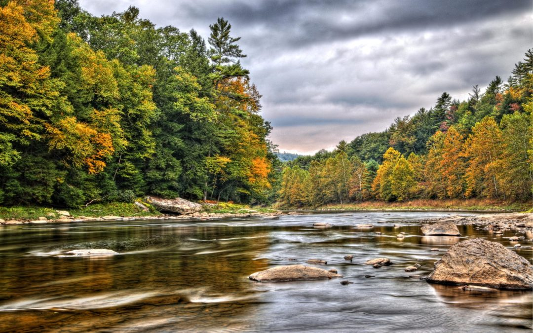 Fall Driving Tour – Fantastic Forests