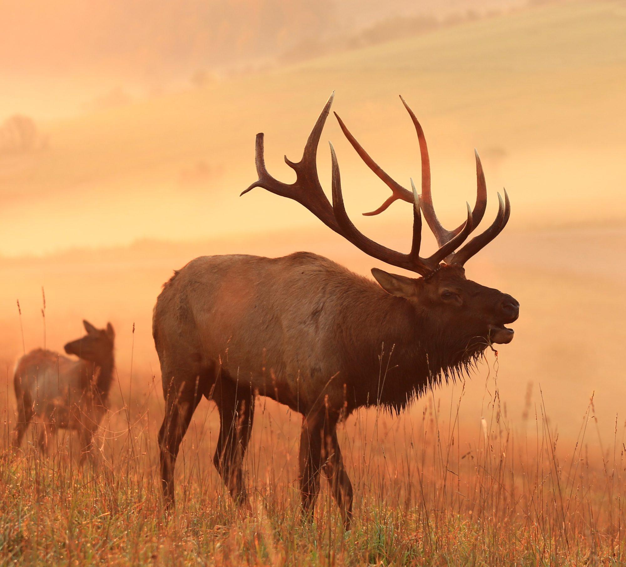 Elk Viewing - Elk County, PA | Visit PA Great Outdoors