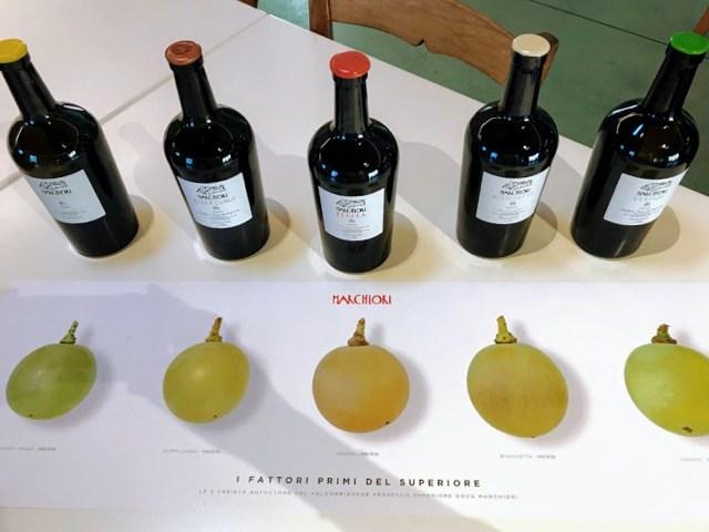 Visit Prosecco Italy Vineyard Marchiori varietals