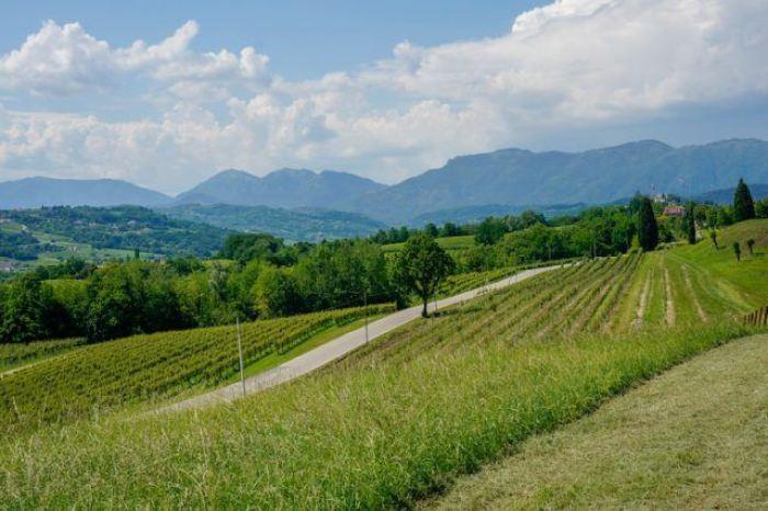 Visit Prosecco Italy Mani Sagge Vinyard