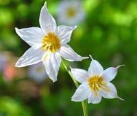 10_wildflower_7