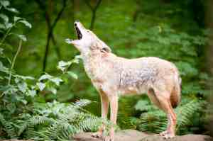 Have a howling good time at the feeding frenzy