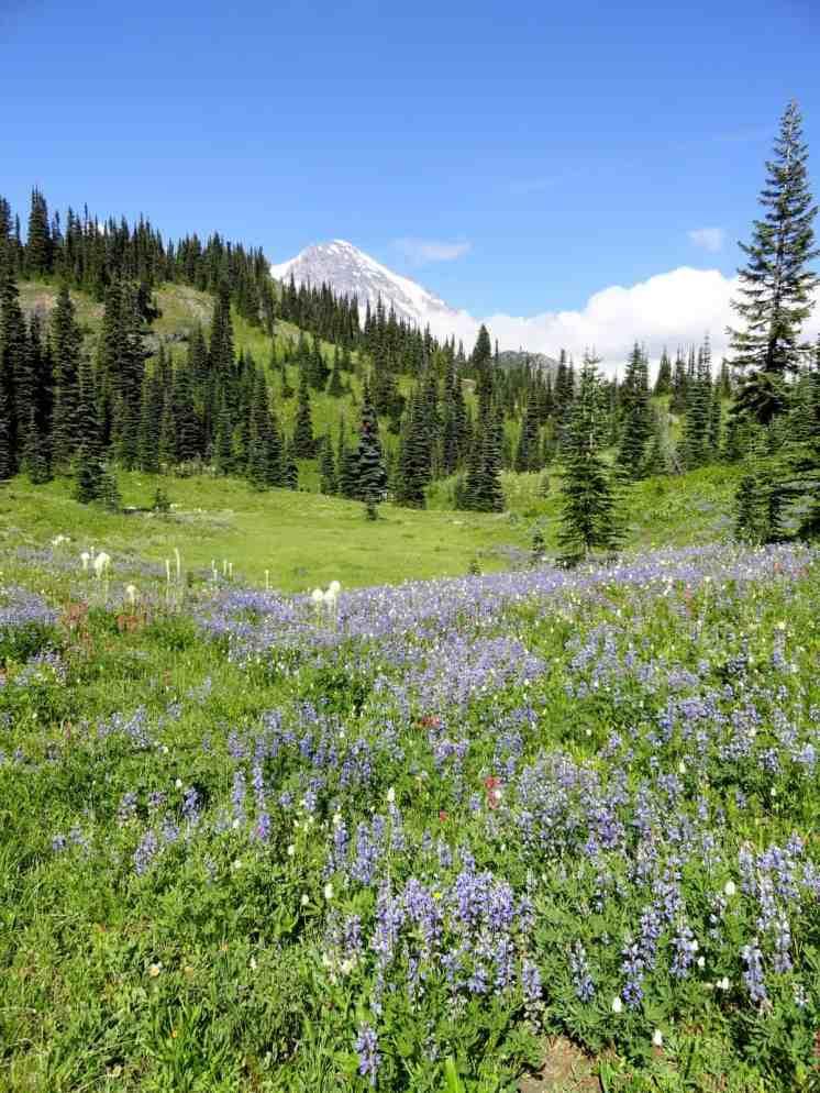 Beautiful wildflower meadows along the trail © Craig Romano