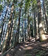 The trail drops 2,000 feet through uniform forest. © Craig Romano
